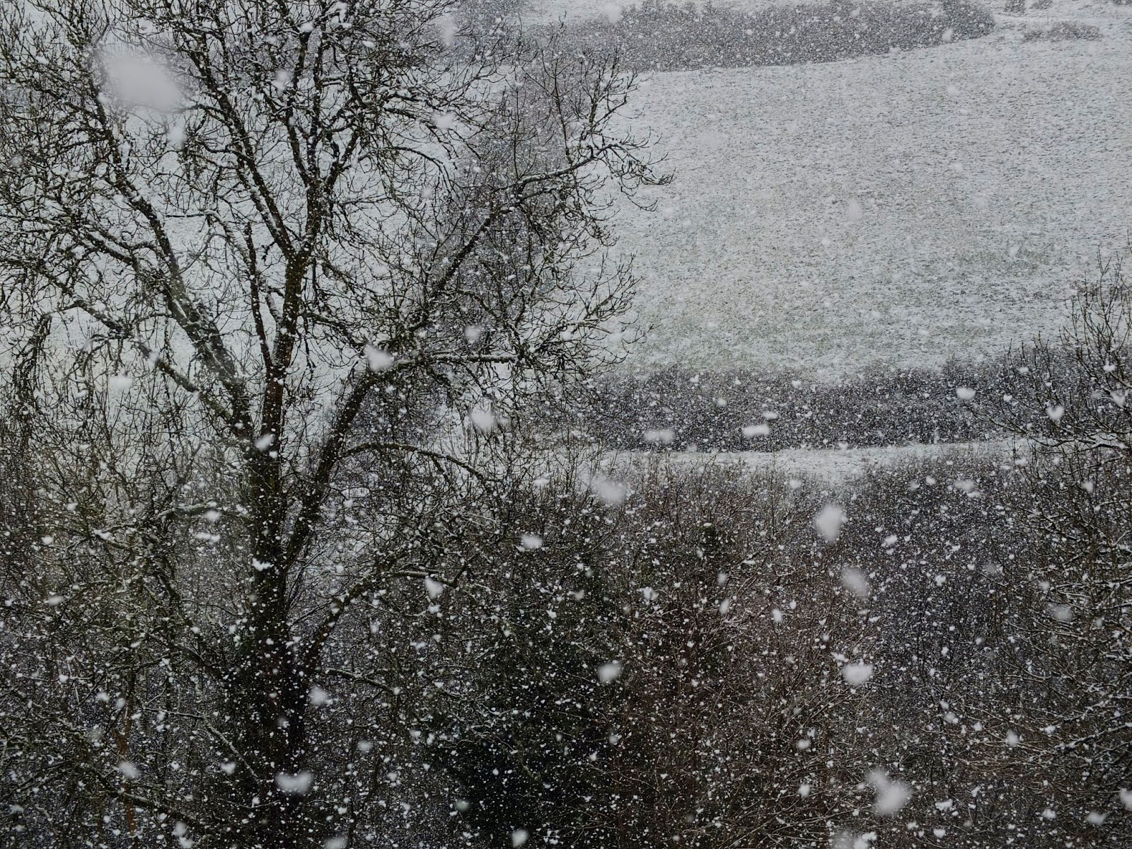 Snowflakes falling from the sky in a valley in North Cork.
