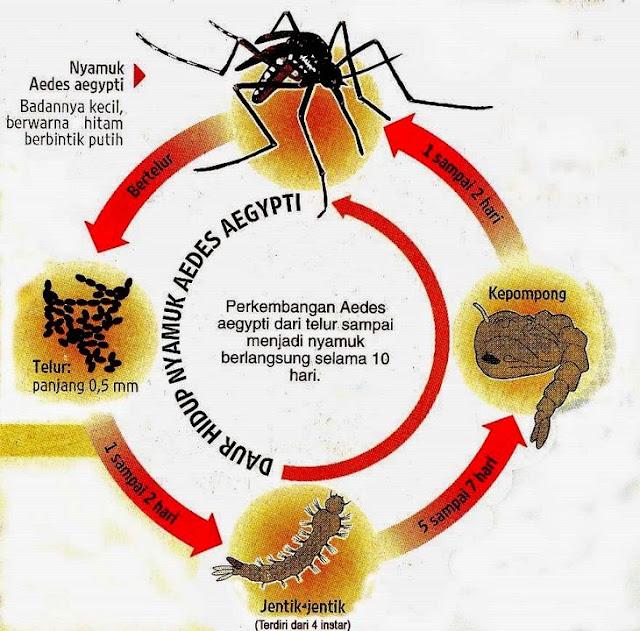 Sepele Sih, Namun Perilaku Ini Jika Dibiarkan Akan Berakibat Nyamuk Aedes Berkembang Pesat