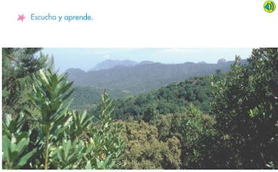 http://www.primerodecarlos.com/SEGUNDO_PRIMARIA/marzo/Unidad1_3/actividades/actividades_una_una/cono/bosque.swf