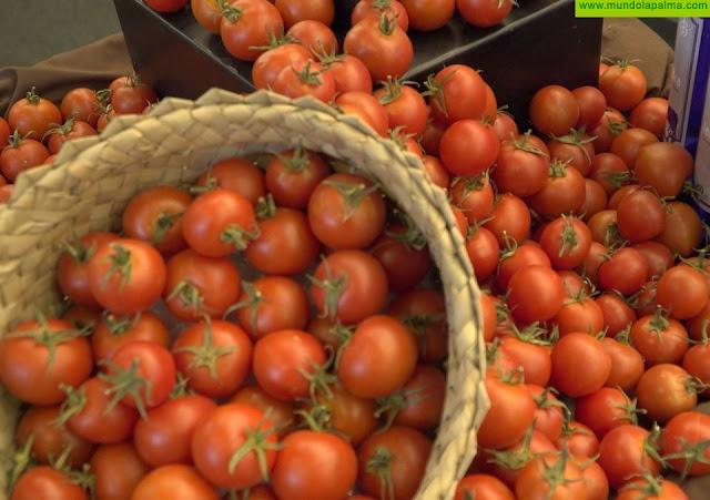 El Gobierno canario abona 5,5 millones del POSEI a los productores de tomate de exportación, aloe vera y olivo