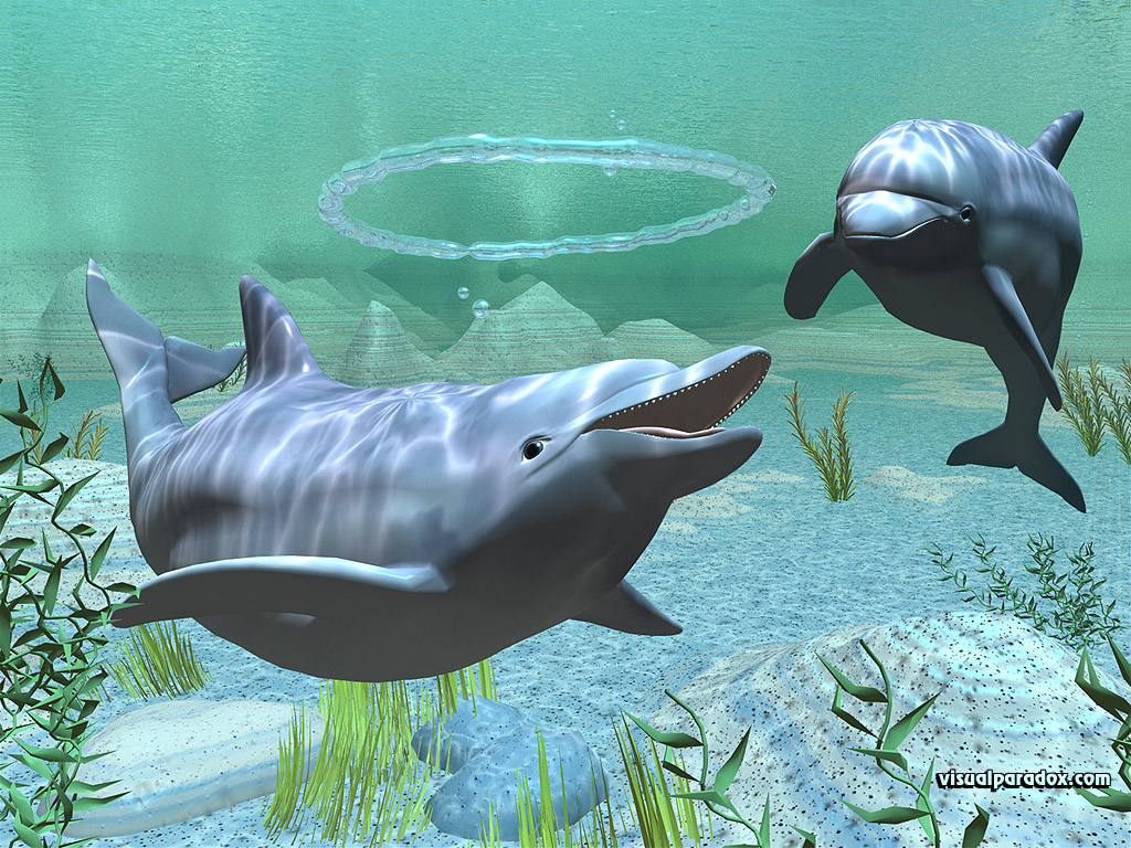Funny dolphins picture - ONLINE NEWS ICON