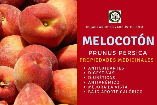 Las propiedades del melocotón son antioxidantes, digestivas, diuréticas, antianémico