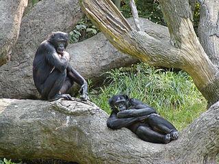 doua primate