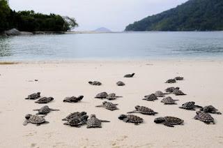 Tempat wisata, pulau penyu