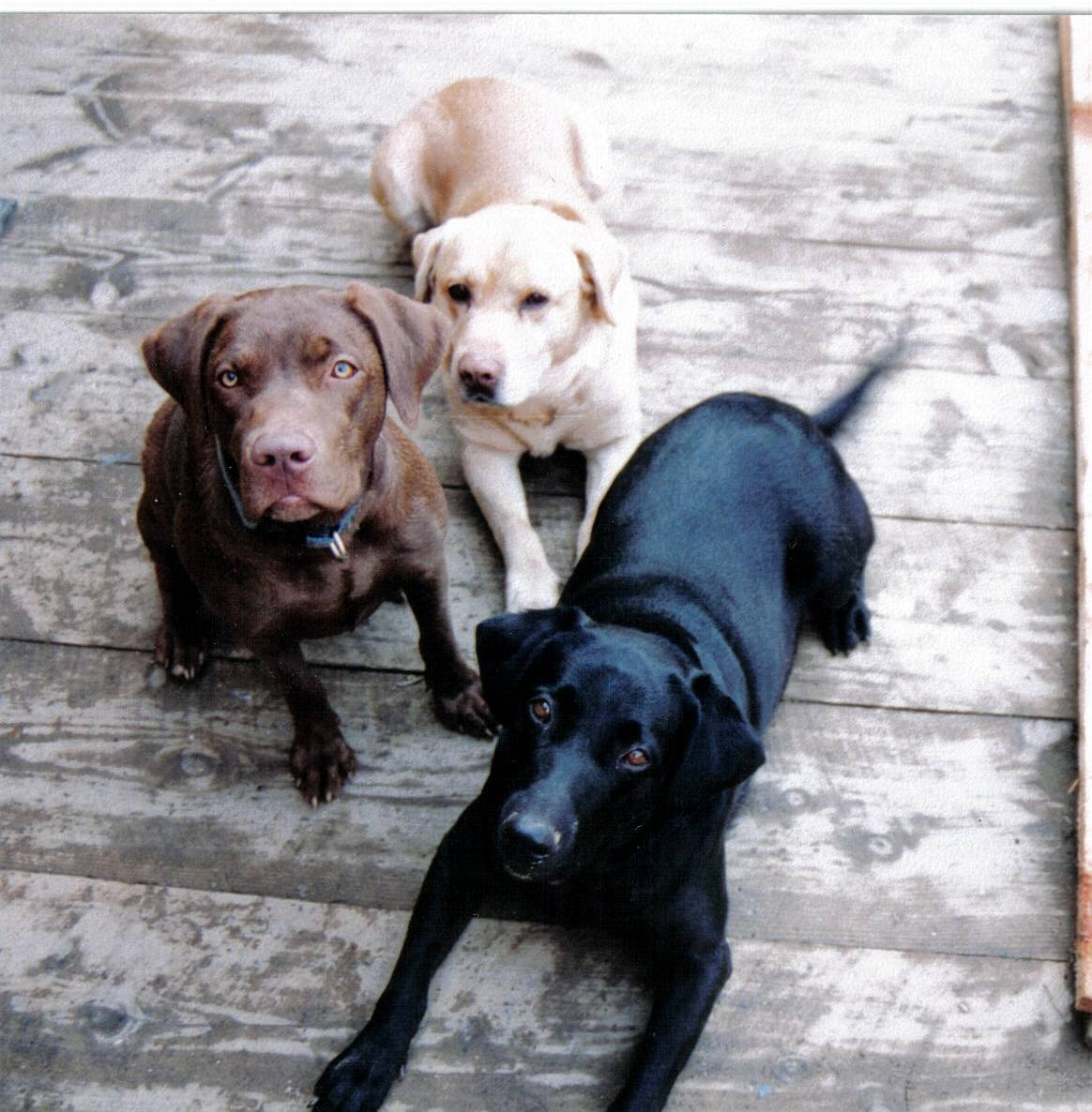 All List Of Different Dogs Breeds About Dogs Breeds