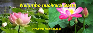 Herbalife use Nelumbo nucifera
