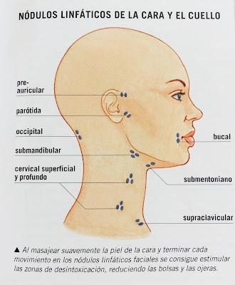 Nódulos Linfáticos de cara y cuello.Paraninfo-renew-style