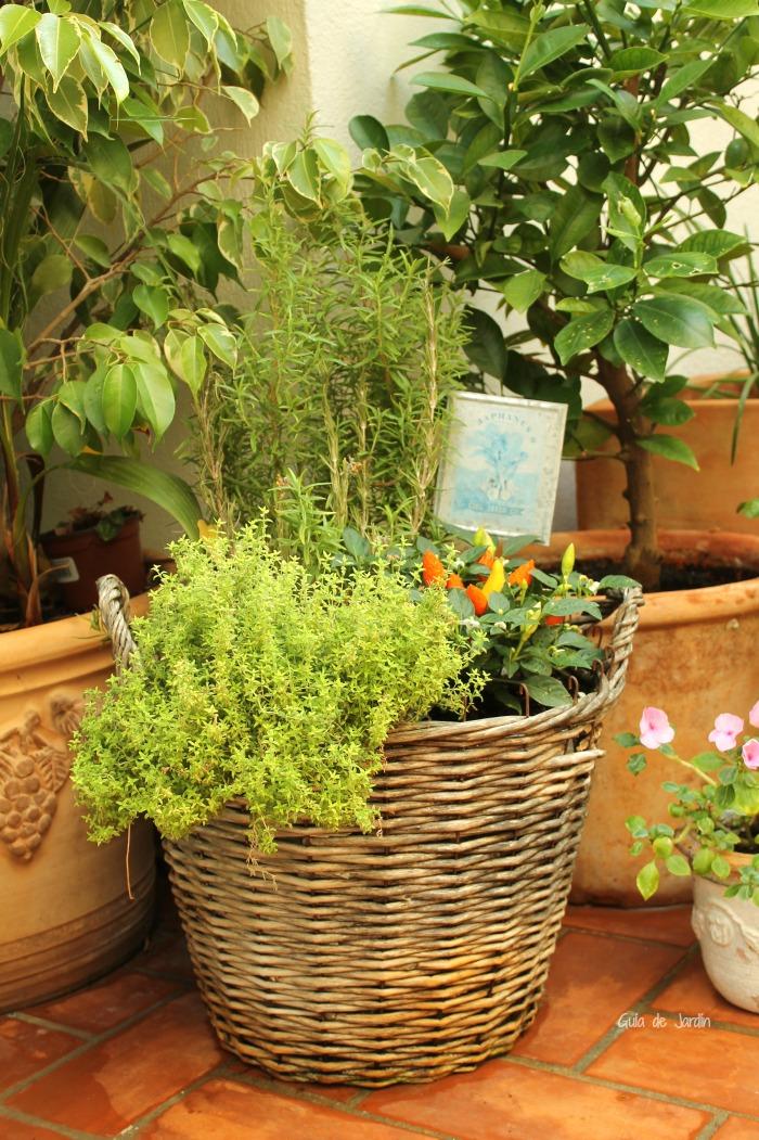 C mo crear un jard n en macetas guia de jardin for Como decorar un jardin con plantas