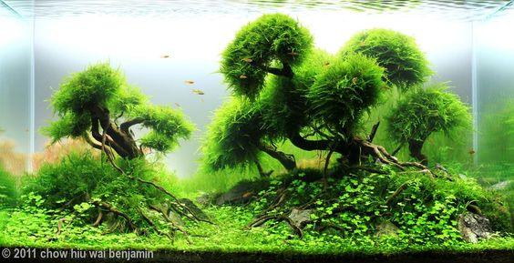 hồ thủy sinh bon sai cấy rêu vô cùng xanh sạch đẹp