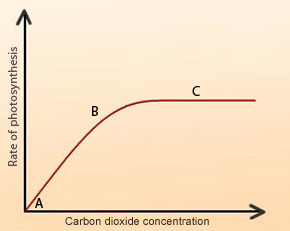 As light intensity increases, what happens to the rate of photosynthesis?