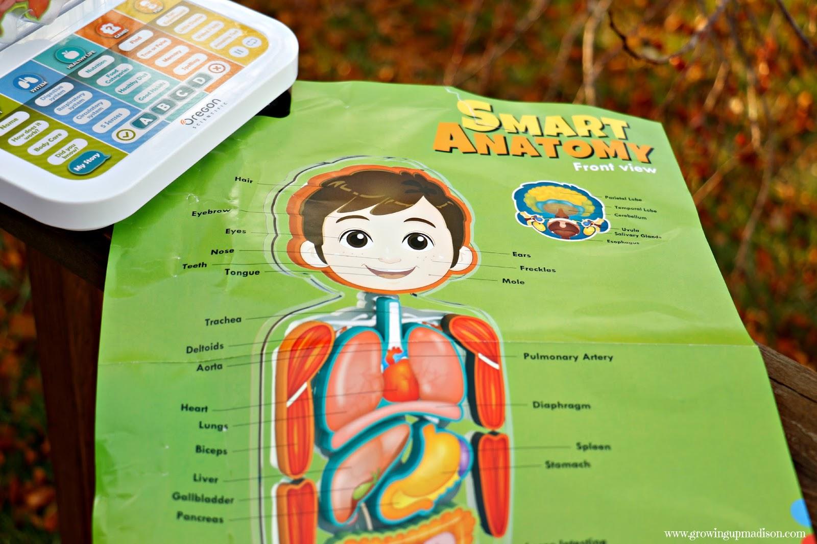 Explore The Human Anatomy With Smart Anatomy Annmarie John