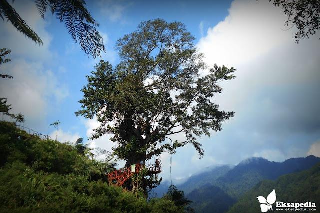 Wisata Rumah Pohon Batang
