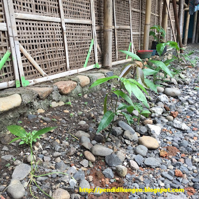 Sebaran Flora di Indonesia