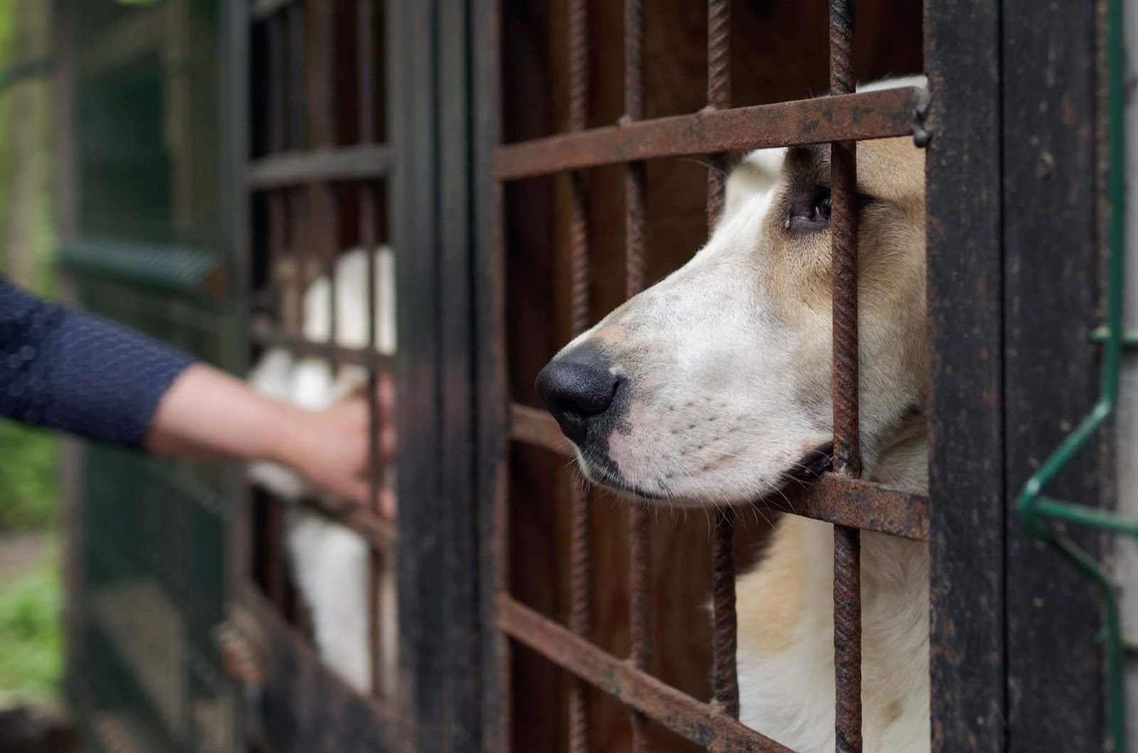 South Korean Court Finally Rules That Killing Dogs For Meat Is Illegal