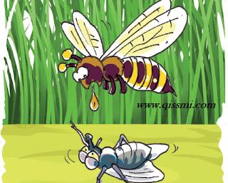 صور بين نحلة و ذبابة