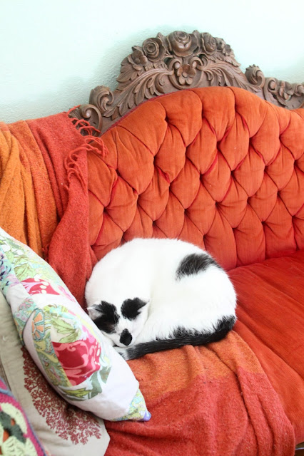 cats, black and white cats, rescue cats,