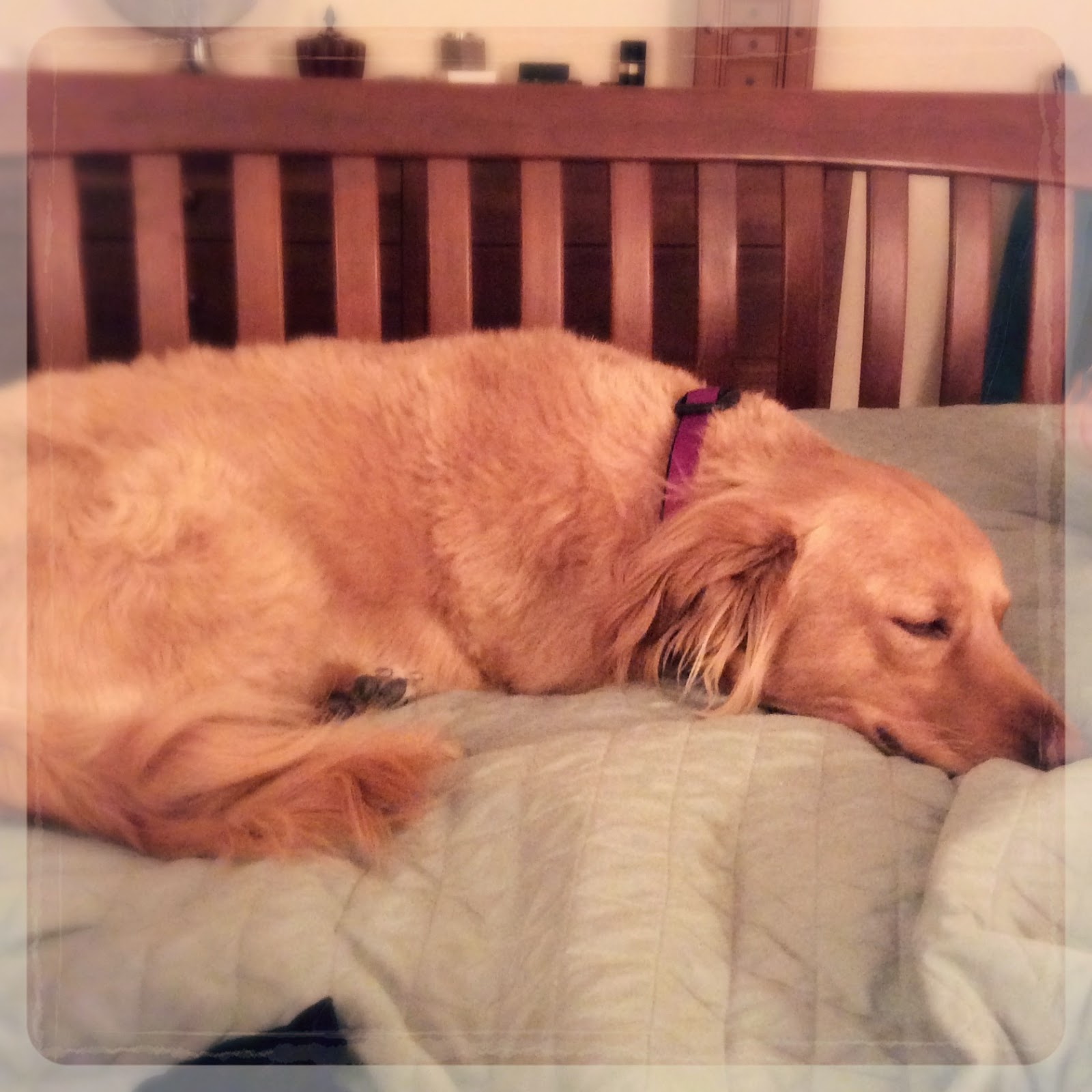 Chester's First Night Home, 11-8-2014 (The 3 Rs Blog)