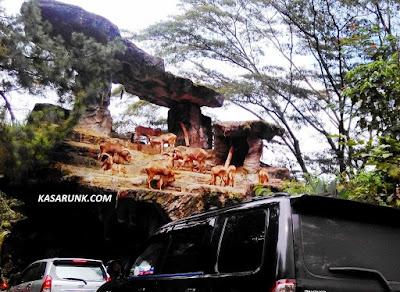 jalan jalan, kebun binatang, taman safari,  kandang kambing gunung