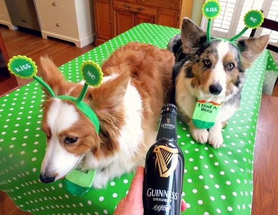 Irish Themed Dog Collars