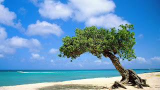 Aruba una Isla para vacaciones