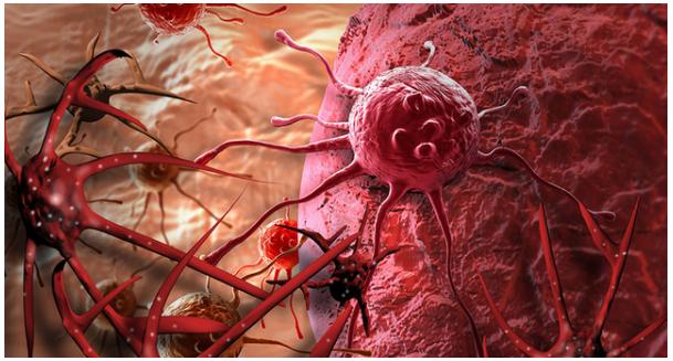Phát hiện chất chống ung thư trong củ gừng