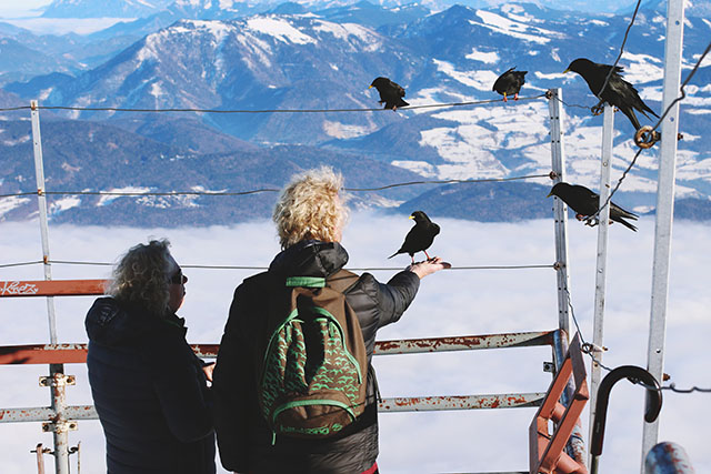 Feeding Untersberg birds