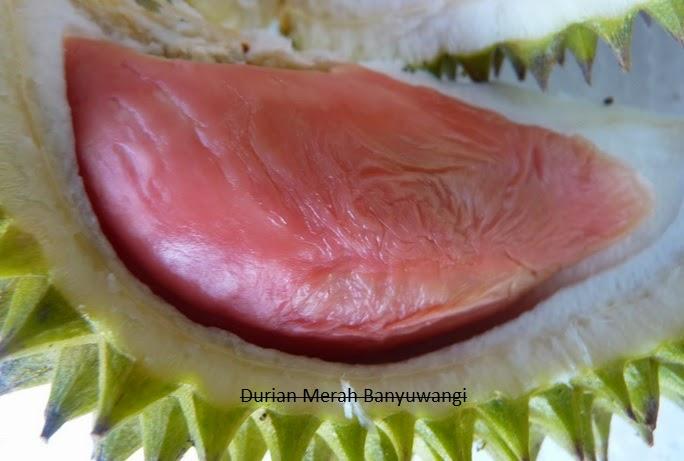 buah durian merah asli kabupaten banyuwangi