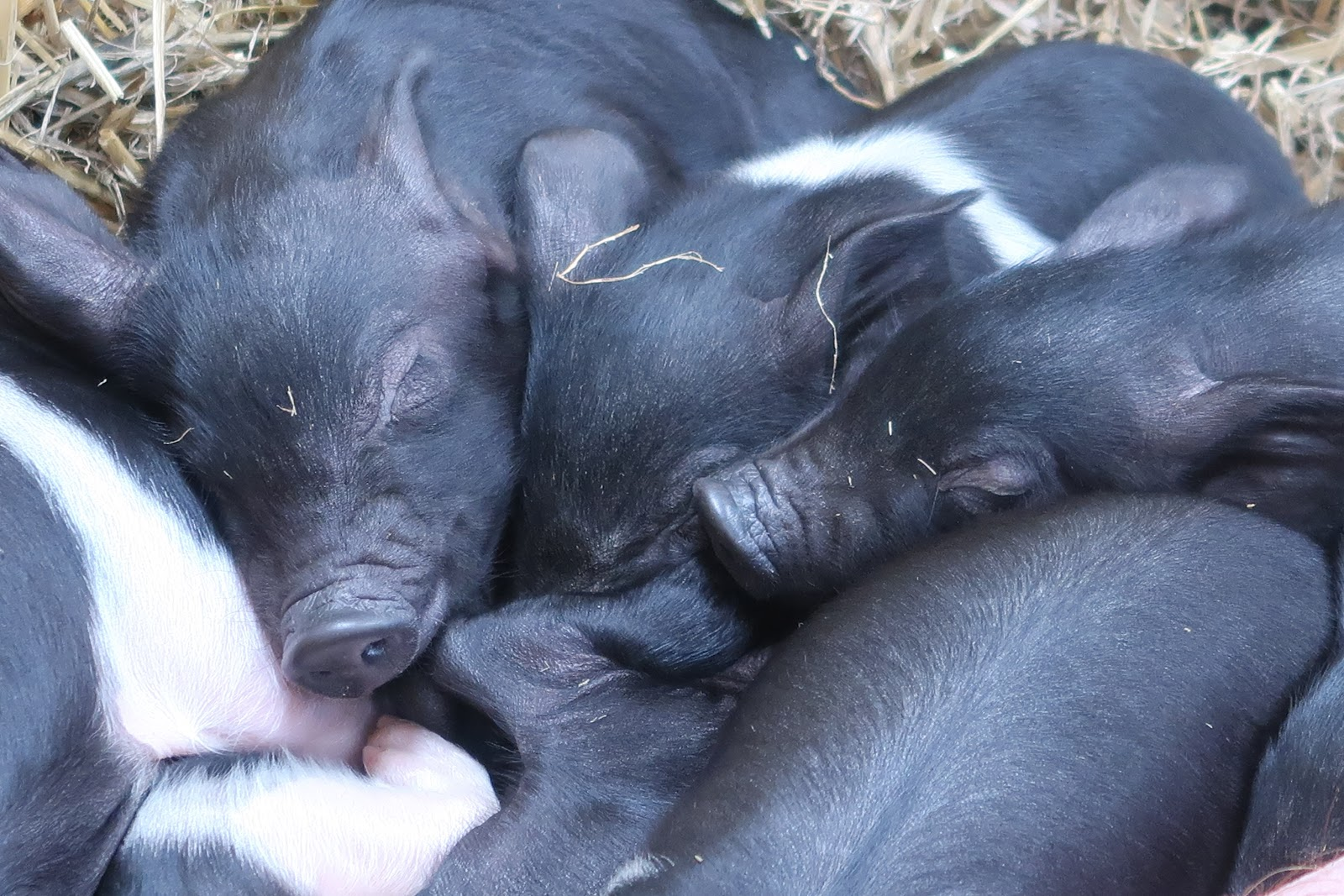 Wigfield Farm Barnsley