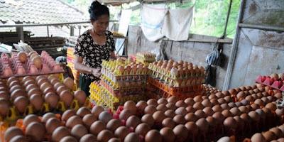 Berbagai Cara Sukses Berdagang Telur
