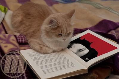 http://mignonworld.blogspot.co.id/2013/06/kucing-membaca-buku-comel.html