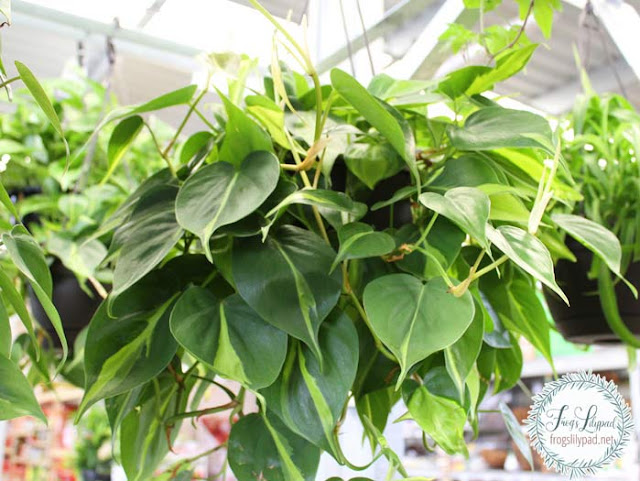 Choosing House Plants - 4 Easy to Care for Plants