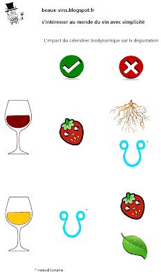 beaux-vins dégustation
