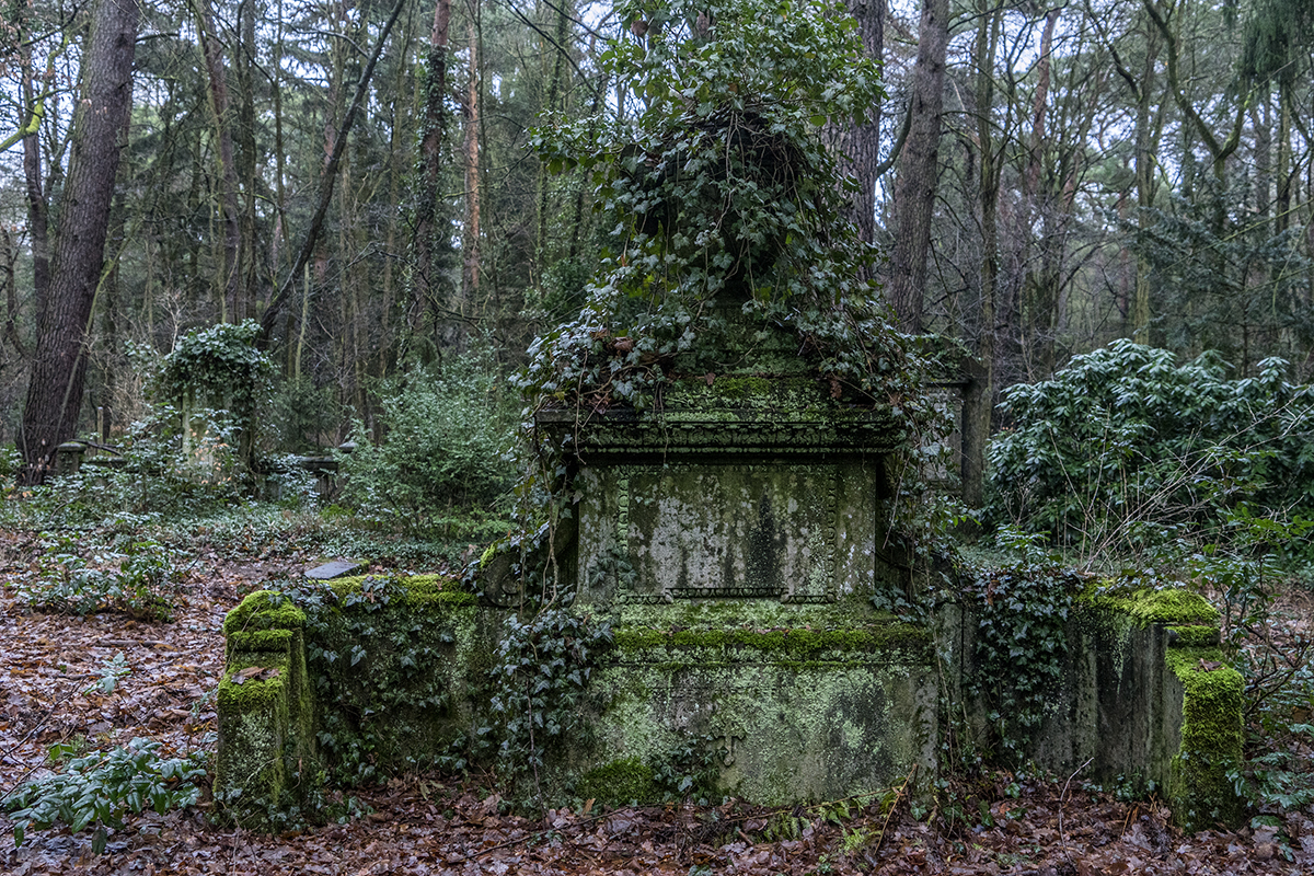 cemetery in the forest -#main