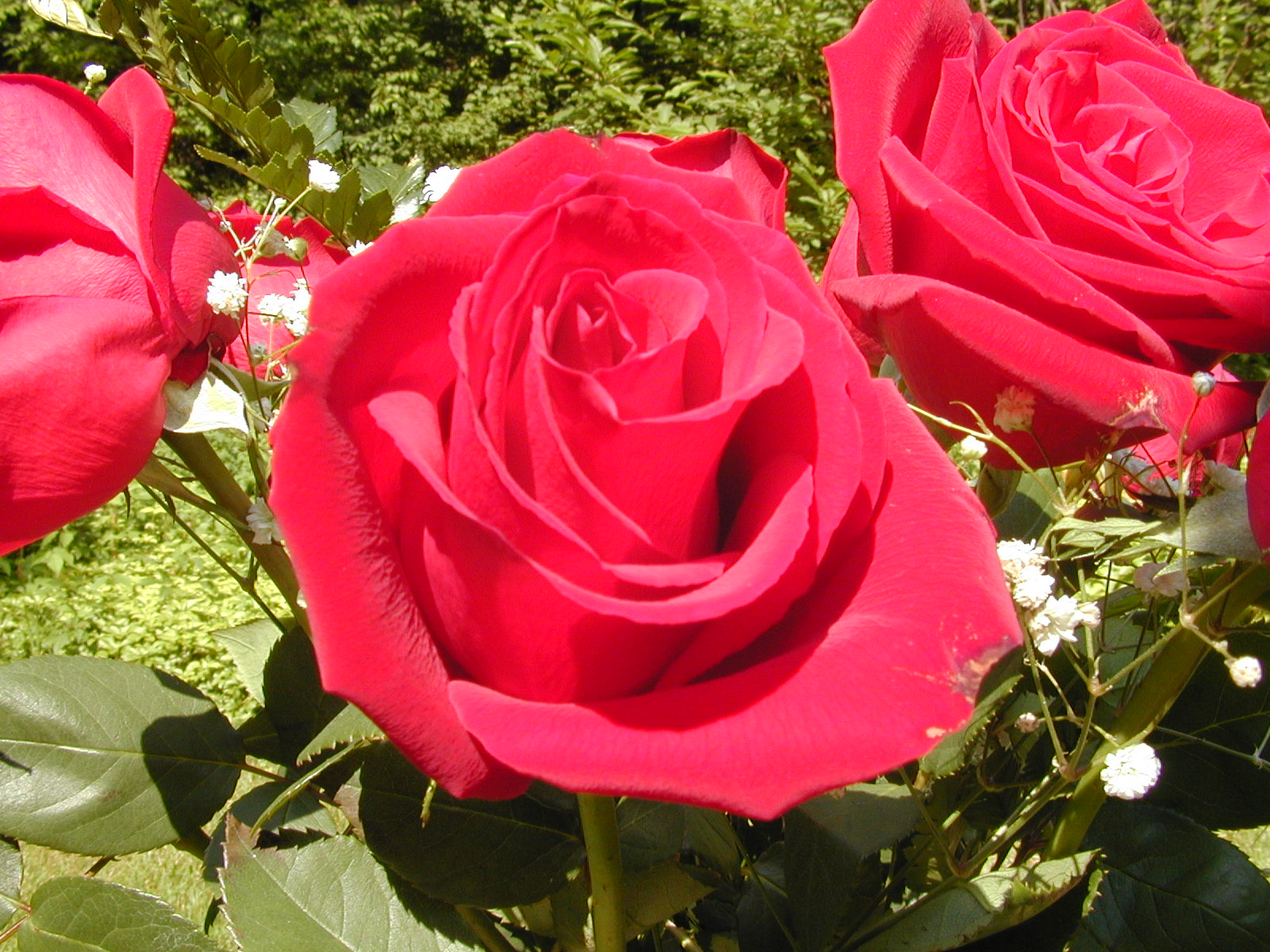 Pictures world 1600 1200 beautiful red rose wallpaper - Beautiful rose wallpaper ...