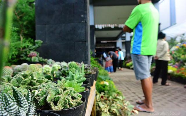 Jejeran Kaktus dijual di depan jalan masuk pasar