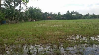 Tanah Dijual Murah Sukawangi Tambun Utara Bekasi Cocok Untuk Perumahan