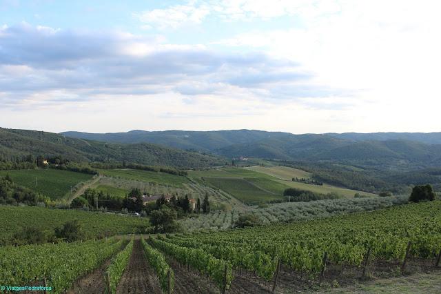 Vinyes del Chianti, Toscana, Italia