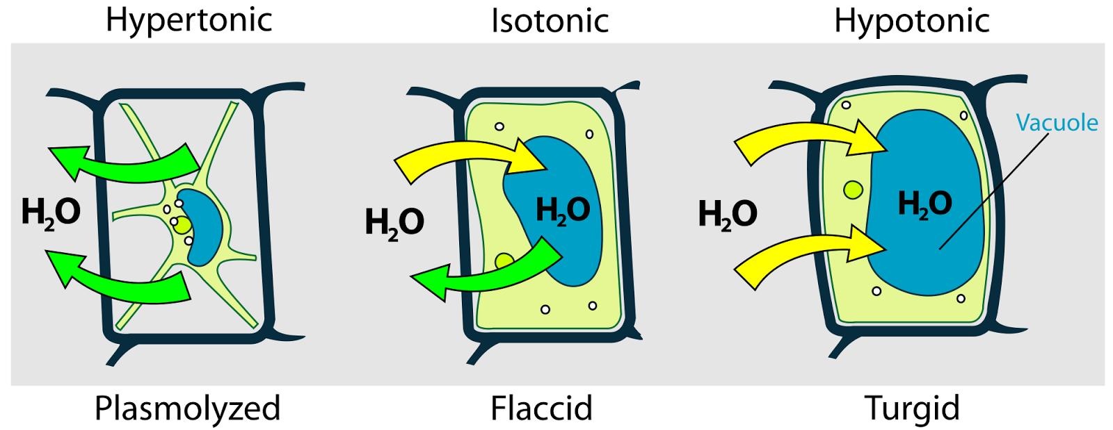 Pengertian Perbedaan Difusi dan Osmosis
