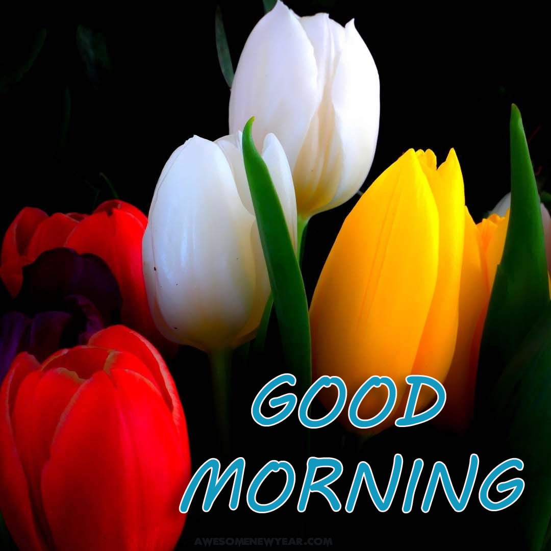 Good Morning Images With Flowers | Gud Mrng Images