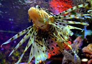 Fauna, Flora, Tiere, Vögel, Fische, Insekten