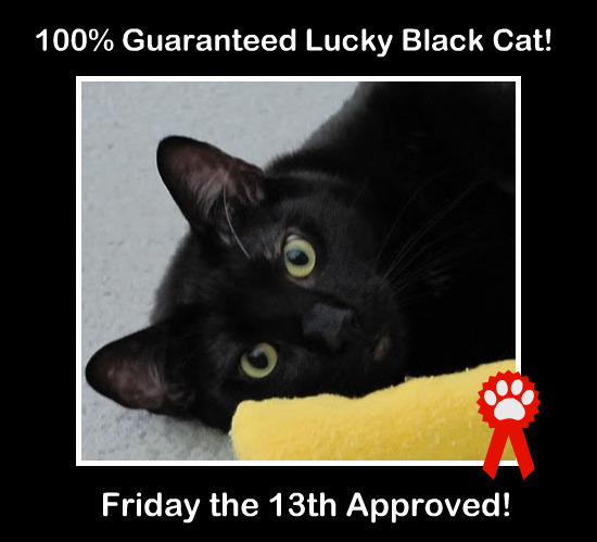 My Friday Five - Friday the 13th - Zinc Moon