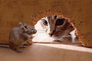 Cats Recruited to Exterminate Rats