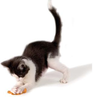 How To Keep Your Cat Or Kitten Amused For Hours, kittens food, cats food, kittens tips, kittens in your life