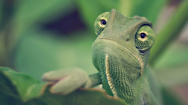 Researchers Use Video Games to Test Chameleons' Vision : eAskme