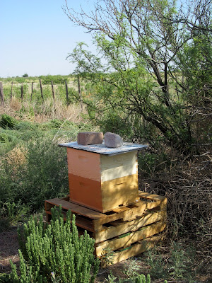 Honey Bee habitat restoration
