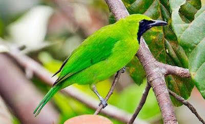 5 Tips Dan Cara Akurat Mengatasi Burung Yang Mengalami Stres Akibat Perjalana Jauh