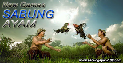 Tata cara dan Aturan dalam permainan Sabung Ayam
