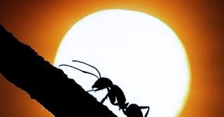 Ini 3 Nasehat Semut Kepada Nabi Sulaiman