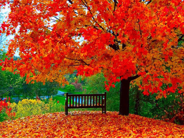 بعض الناس... Wooden-bench-of-autumn-wallpaper
