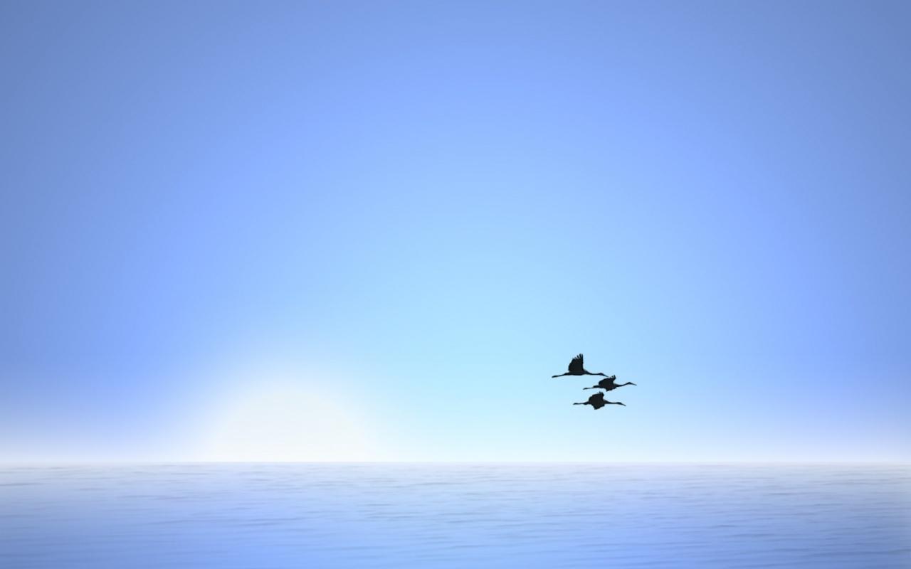 Wallpapers Hd Flying Birds Apple Animals Blue Sky Desktop: Bird Fly In Blue Sky Wallpaper